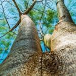 биотип дерево