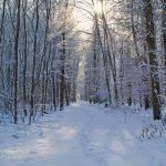 Сезон «Дунчжи» ( Зимнее солнцестояние)