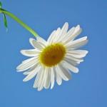 flower-198217_1280