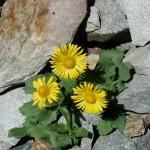 цветок на горе