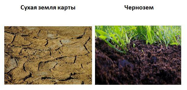 земля в бацзы