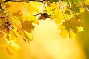 autumn-220111_640