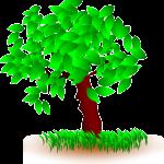 сила дерева в карте