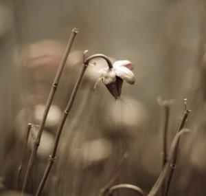 сухой цветок