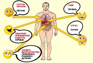эмоции и органы
