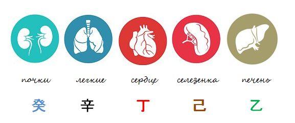органы и ДД