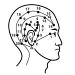 голова желчный пузырь